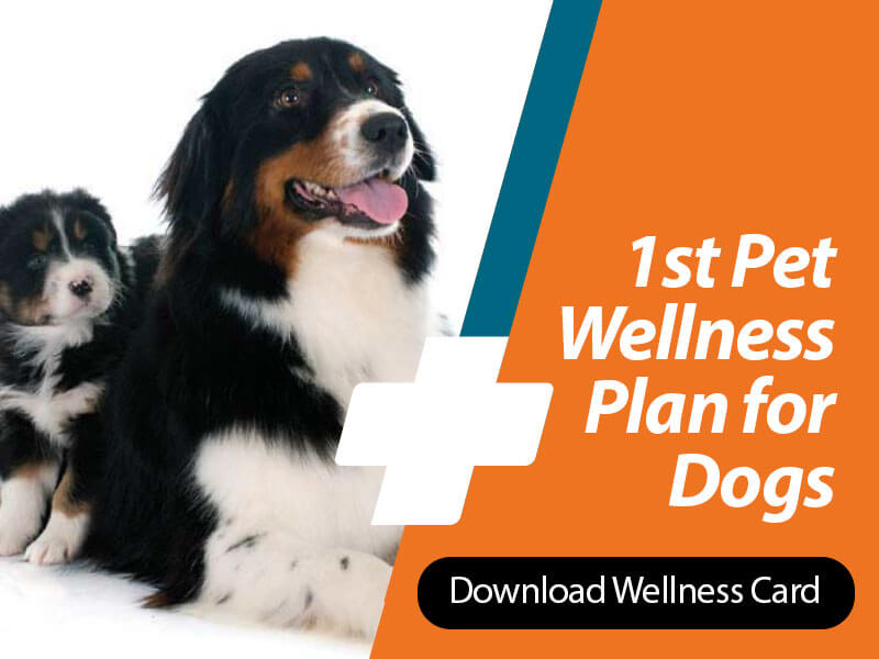 1st Pet Vet: Wellness Card for Dogs