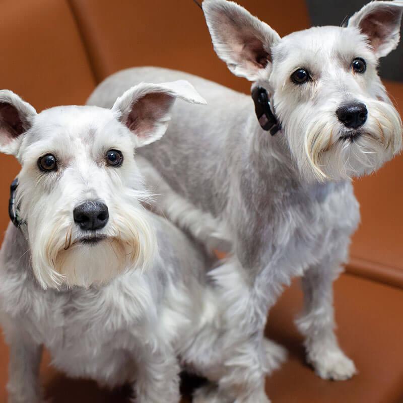 1st Pet Vet Patients-25