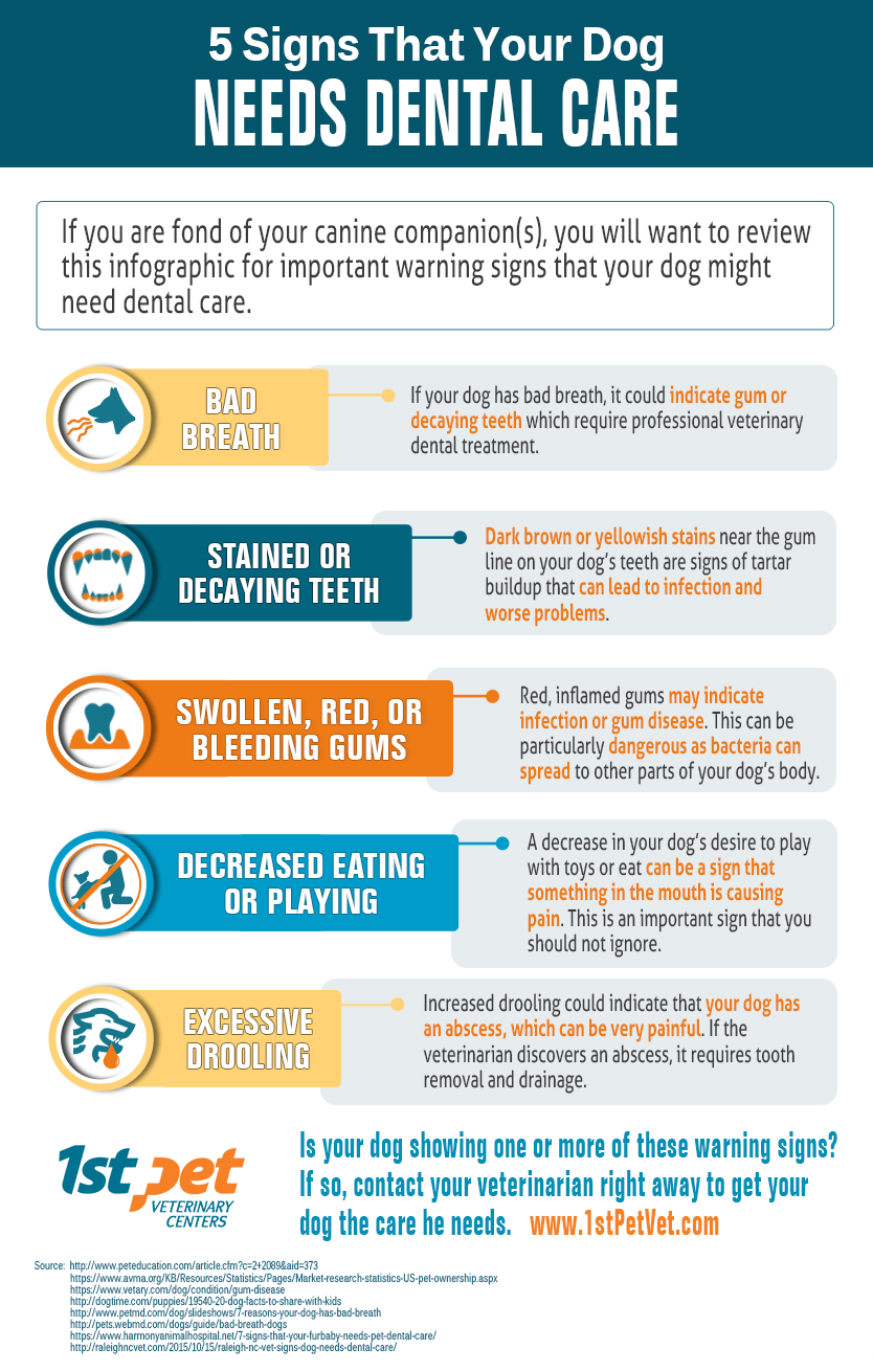 5 Signs That Your Dog Needs Denral Care