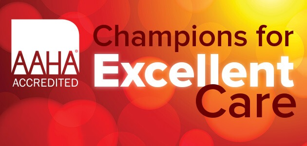 AAHA Accredited Champions for Excellent Care