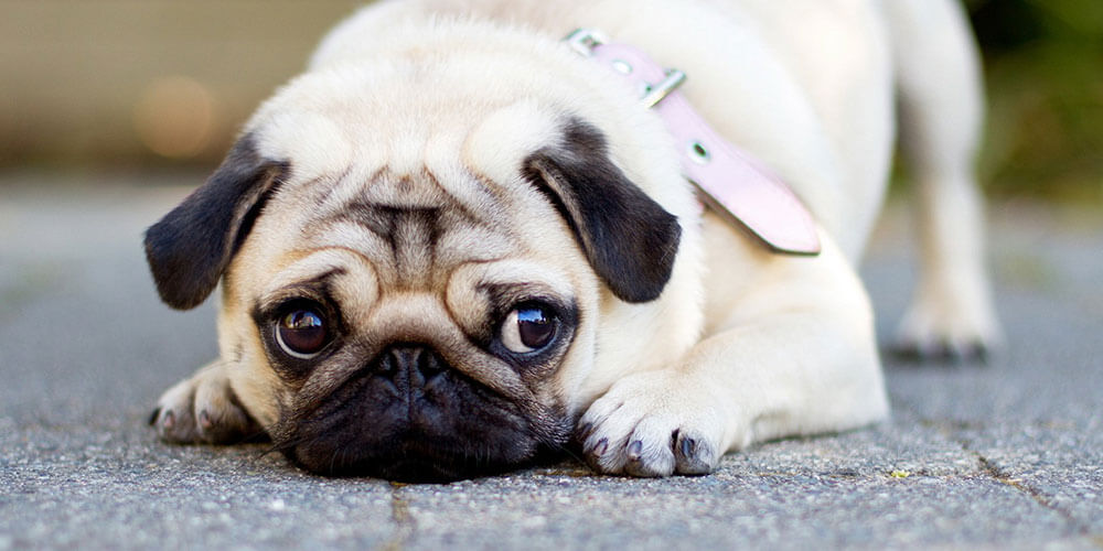 Stress Signals: What Every Dog Owner Should Know About Pet Anxiety: 1st Pet Veterinary Centers