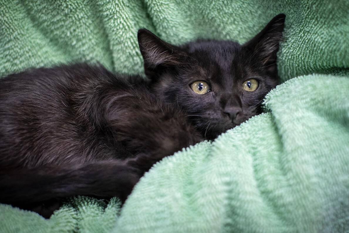 Veterinarian Checklist For Stray Cats 1st Pet Veterinary Centers
